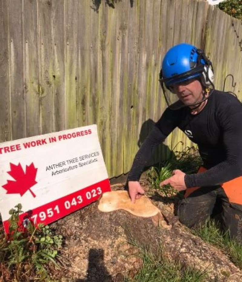 Anther Tree Services